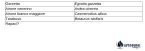 zibidouccelli